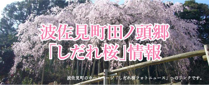 波佐見町田ノ頭郷_しだれ桜